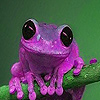 Purple acrobat frog slide puzzle