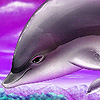 Purple ocean dolphins puzzle