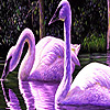 Purple swans in the lake puzzle