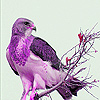Purple tree bird slide puzzle