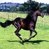 Puzzles: Black Horses