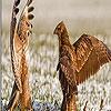 Quarrelsome birds puzzle
