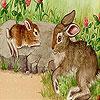 Rabbits at the farm puzzle