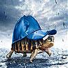 Rain and turtle slide puzzle