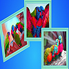 Rainbow birds puzzle