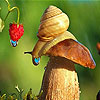Rainy day and snail puzzle