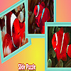 Red anemone fishes puzzle
