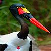 Red billed water bird slide puzzle