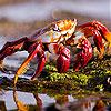 Red crab slide puzzle