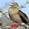 Red footed bird slide puzzle