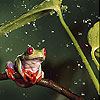Red footed frog slide puzzle