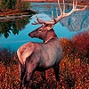 Red forest deers puzzle