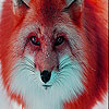Red forest fox slide puzzle