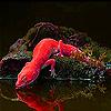 Red iguana on the island slide puzzle