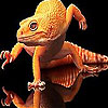 Red lizard slide puzzle