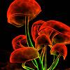 Red mushrooms puzzle