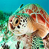 Red sea turtle puzzle