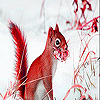 Red squirrel in the snow slide puzzle