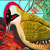 Red woodpeckers puzzle