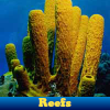 Reefs. Find objects