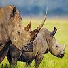 Rhino Slide Puzzles