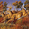 Runner deers slide puzzle