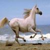 Running Horse Jigsaw