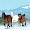 Running Horses Sliding