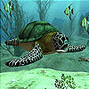 Sea turtle slide puzzle