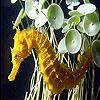 Seahorse slide puzzle
