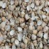 Shells Slider
