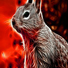 Shine squirrel in forest puzzle