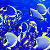 Shoal fishes puzzle