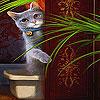 Shy cat slide puzzle