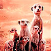 Little shy meerkat family slide puzzle