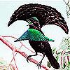 Singer bird slide puzzle