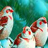 Singer birds in winter puzzle