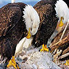 Sleepy eagles slide puzzle