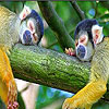 Sleepy monkeys slide puzzle