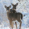 Snow and deers slide puzzle