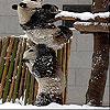 Snow and pandas slide puzzle