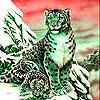Snow leopard family slide puzzle