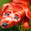 Sorrowful dog puzzle