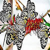 Spotted butterflies slide puzzle