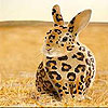Spotted rabbit slide puzzle