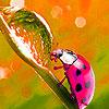 Spring ladybugs puzzle