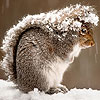 Squirrel in the snow slide puzzle