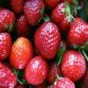 Strawberries Slider