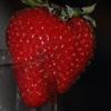Strawbery Puzzle