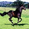 Stride Horse Jigsaw